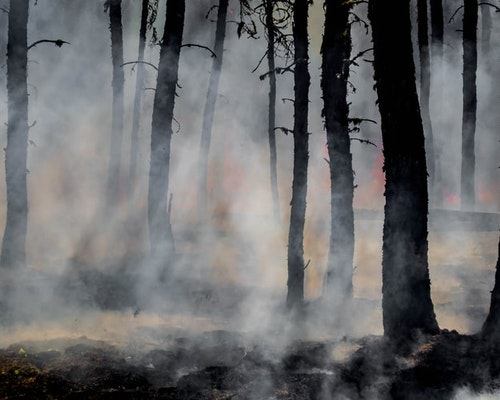 Caldor Fire Levels Properties In El Dorado County, California