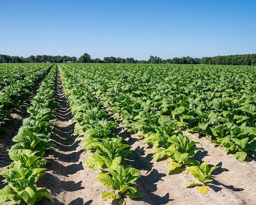 Two Sentenced For Massive Crop Insurance Fraud Scheme